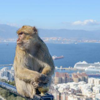 Verhuizen van of naar Gibraltar