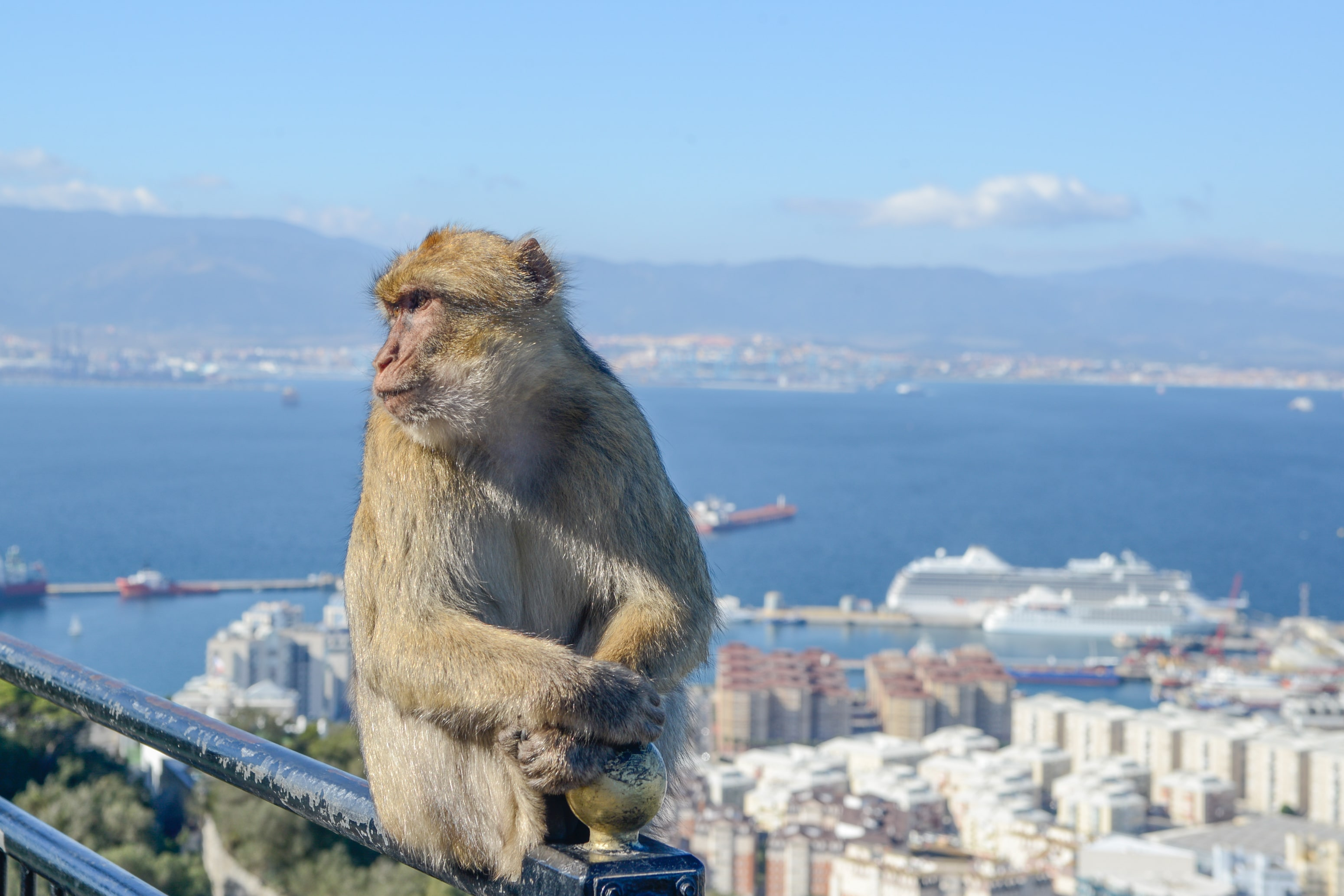 Verhuizingen Gibraltar Hakotrans