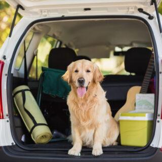 ¿Cómo hacer mudanzas con mascotas? Sigue estos consejos